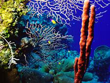 8. Coral Garden