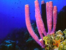 5. Pink Tube Sponge