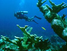 3. Elkhorn Coral & Diver