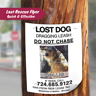 Flyers -  Lost/Rescue